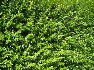 file overgrown green bush jpg