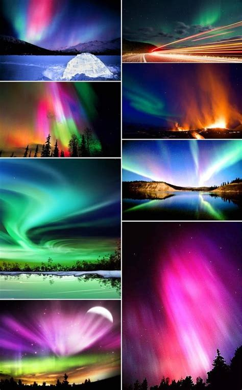 Northern Lights Albany Ny by 10 Best Images About On Beautiful Kale