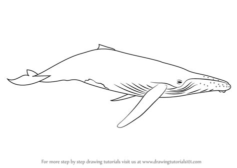 whale pattern drawing learn how to draw a humpback whale marine mammals step