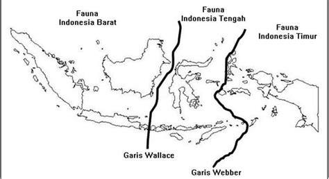 flora dan fauna indonesia peta persebaran flora dan fauna di indonesia terlengkap