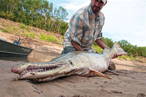 Snapped Hunters Catch And Kill 15ft 800lb Alligator This Alligator Is The Largest Alive In