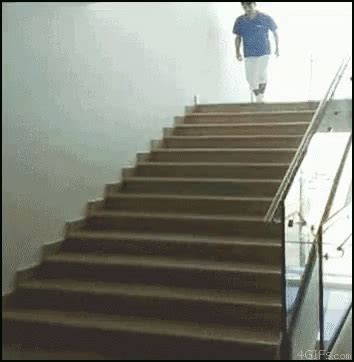 pug stairs gif stairs gif stairs discover gifs
