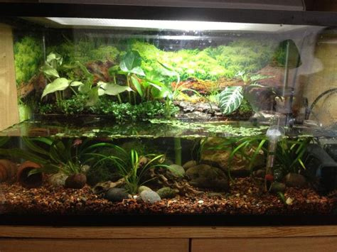 aquarium design for turtles img 0729 jpg 1200 x 900 57 plantys pinterest