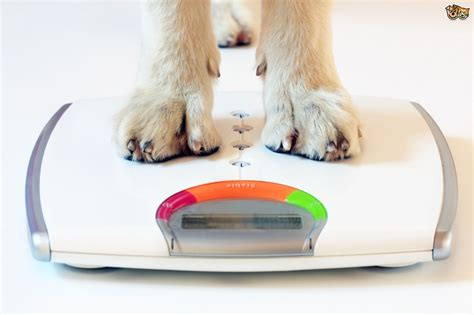 how to make a puppy gain weight tips to help underweight dogs gain weight pets4homes
