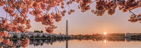 cherry blossom festival dc homewood suites by hilton cherry blossom festival hotels