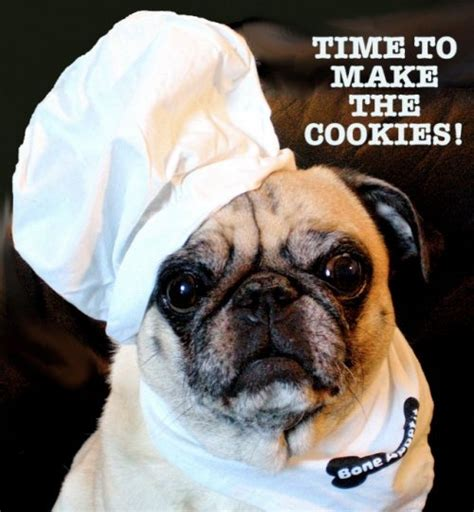 cookie pug cookies pugs and peis