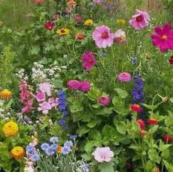 cottage garden flower seeds 25 best wildflower seeds ideas on flower