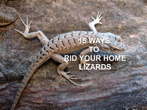 how to get rid of lizard in my room the nifty thrifty family 15 ways to rid your home of lizards