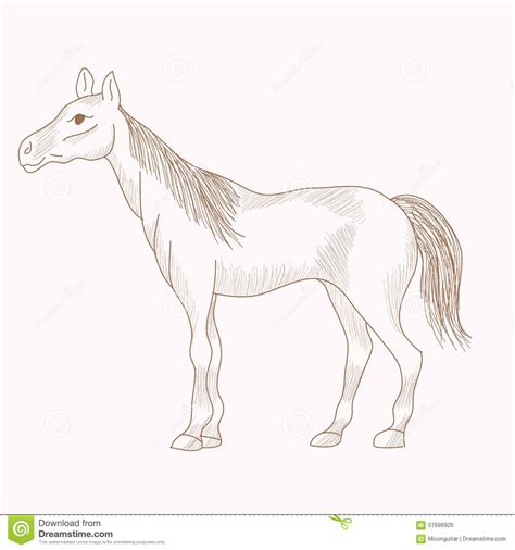 draw horse illustrator hand drawn horse pencil drawing of mare stock vector