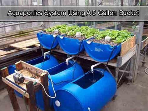 aquaponics system    gallon bucket