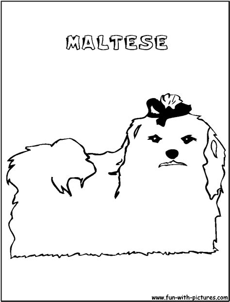 coloring pages of maltese puppies maltese coloring page