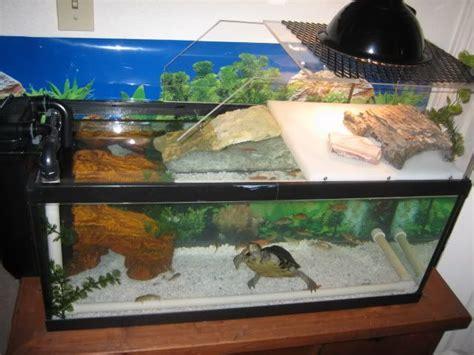 aquarium design for turtles diy turtle topper turtle stuff pinterest turtles and