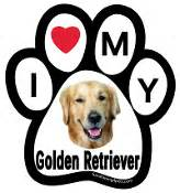 golden retriever paw print f4p color breed paws