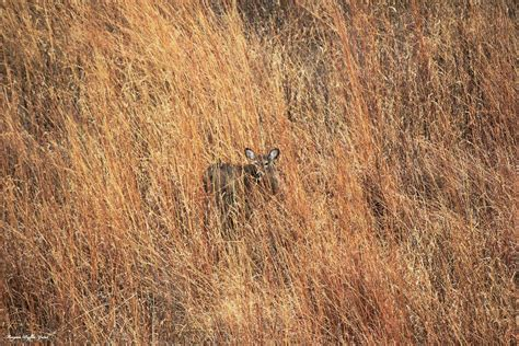 deer bedding areas the necessitates of hunting land victory outdoors