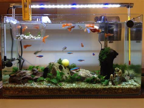 aquarium design for guppies guppy aquarium aquariums pinterest
