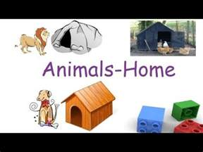 their home animals and their homes for children flash cards