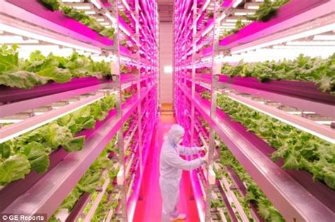 indoor farming led lights now that s a power plant indoor farm grows 10 000 heads