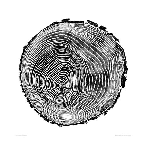 tree cross sections scots pine tree cross section