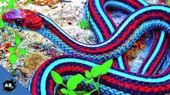 colorful snakes world s most colorful snakes ep 426 snakebytestv