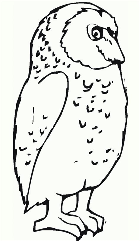 coloring page of great horned owl free printable owl coloring pages for kids
