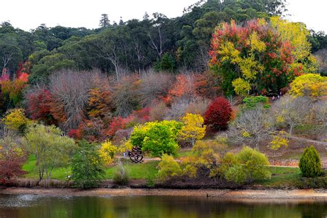 Mt Lofty Botanical Gardens Mount Lofty Botanical Gardens Adelaide By Mckinnon