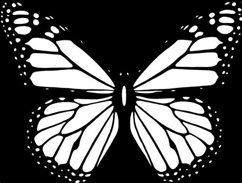 Kupu Hitam gambar kupu kupu hitam putih terbaru gambarcoloring