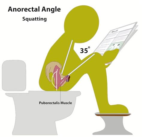 bathroom posture health benefits of the natural squatting position circle