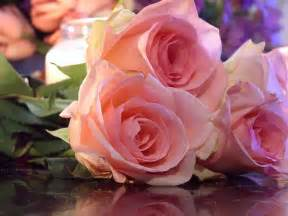 imagenes de rosas fondo fondos de rosas fondos de pantalla de rosas flores