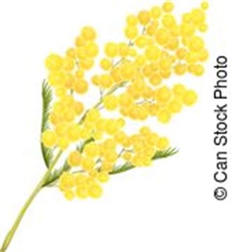 mimosa clipart mimosa illustrations and stock 610 mimosa