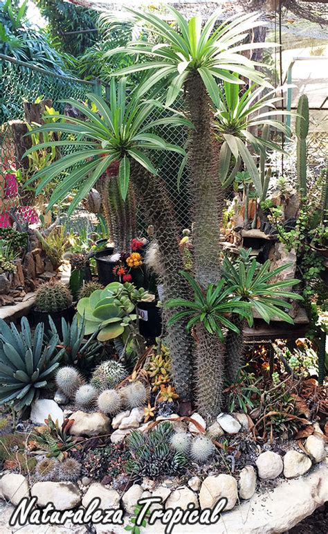decorar jardin con plantas deserticas naturaleza tropical crea tu propio desierto para decorar