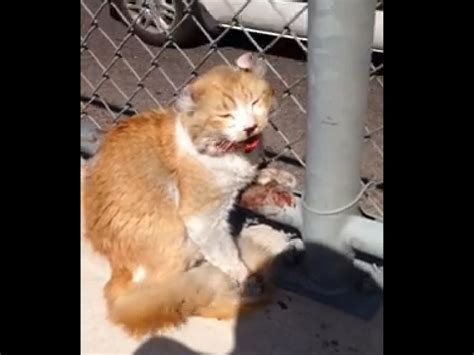 how to comfort a scared cat good samaritan rescues scared cat from busy freeway life