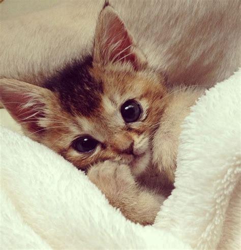 imagenes tiernas gatitos bebes gatos bebes tiernos buscar con google gatinos