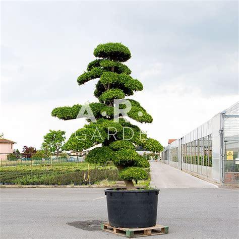 Photo Jardin Zen Chez Particulier by Arbre Nuage Japonais Ainsi Que Duun Jardin Zen