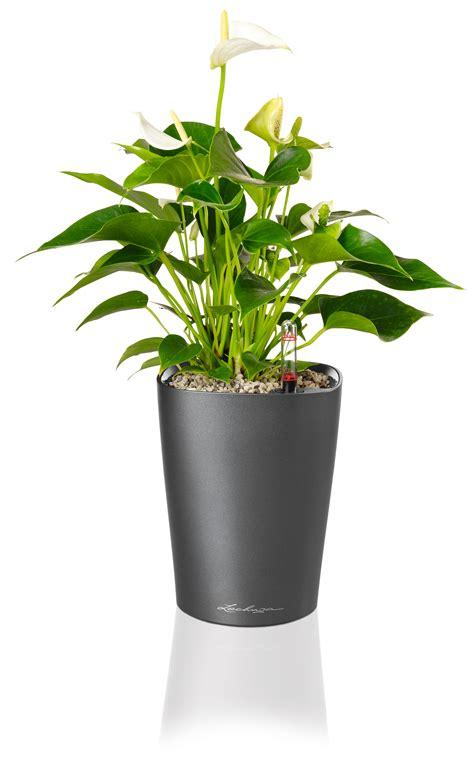 Planters Plants lechuza deltini self watering planter metropolitan