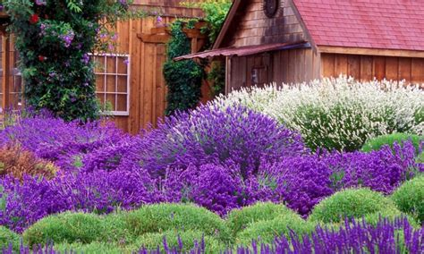 lavender flower beds landscaping gardening ideas