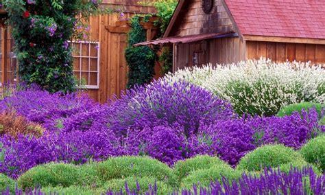 Lavender Flower Beds Landscaping Gardening Ideas Lavender Garden Ideas