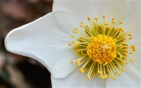 fiore invernale fiori invernali quali sono e come coltivarli