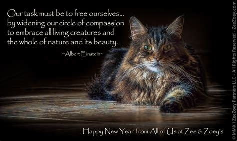 the year of the cat new year and so it begins a new year new possibilities zee