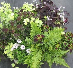 Annuals For Planters by Shade Loving Potted Plants Remember For Window Boxes
