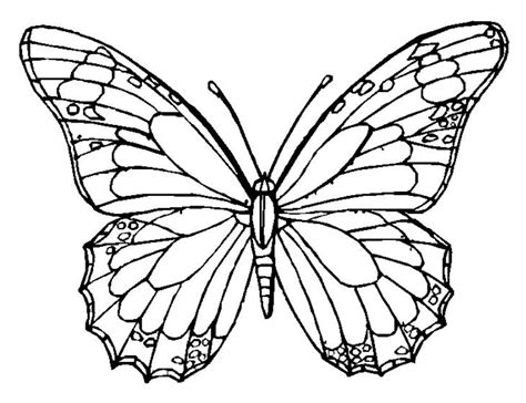 coloring pages of big butterflies butterfly coloring page coloring book