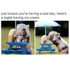 Having A Bad Day Meme - cute meme kappit