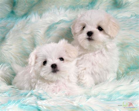 puppies with babies white baby wallpaper 15326