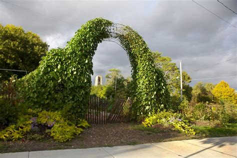Woodlawn Gardens by Best Community Gardens In Chicago 171 Cbs Chicago