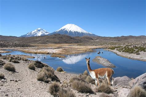 Wool Duvet Quot Vicuna Lauca National Park Quot By Michael Sheridan Redbubble
