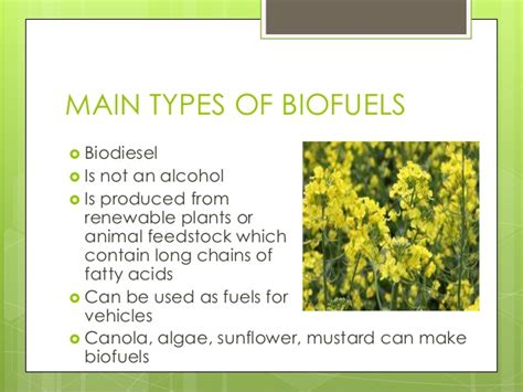 What Type Of Tree Is Used To Make Paper - biofuel