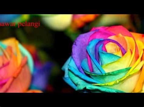 Standar Bunga Mawar jenis jenis warna bunga mawar