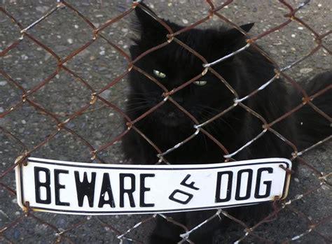 Bad Beware Of The Running T1910 4 catsparella beware of cat
