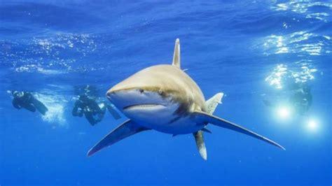 film barat ikan hiu bule amerika digigit hiu saat berselancar di pantai balian