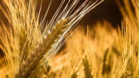 grain wallpaper cool macro grain wallpaper wallpaper wallpaperlepi