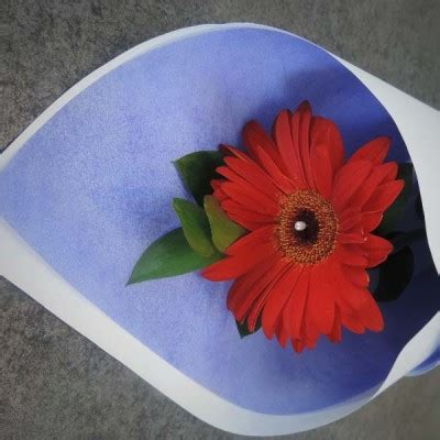 Kalung Fashion Single Flower single sunflower flowers fashion